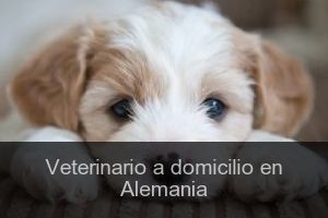 Veterinario a domicilio en Alemania
