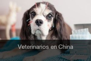 Veterinarios en China
