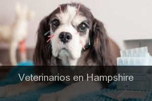 Veterinarios en Hampshire